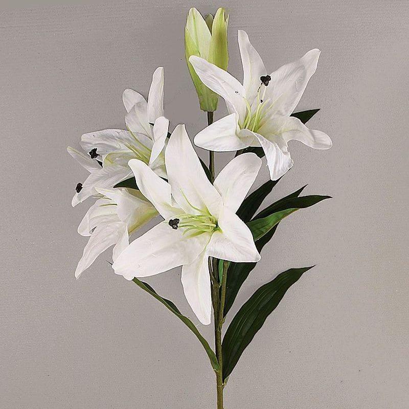 ветка белой лилии фото наши дни
